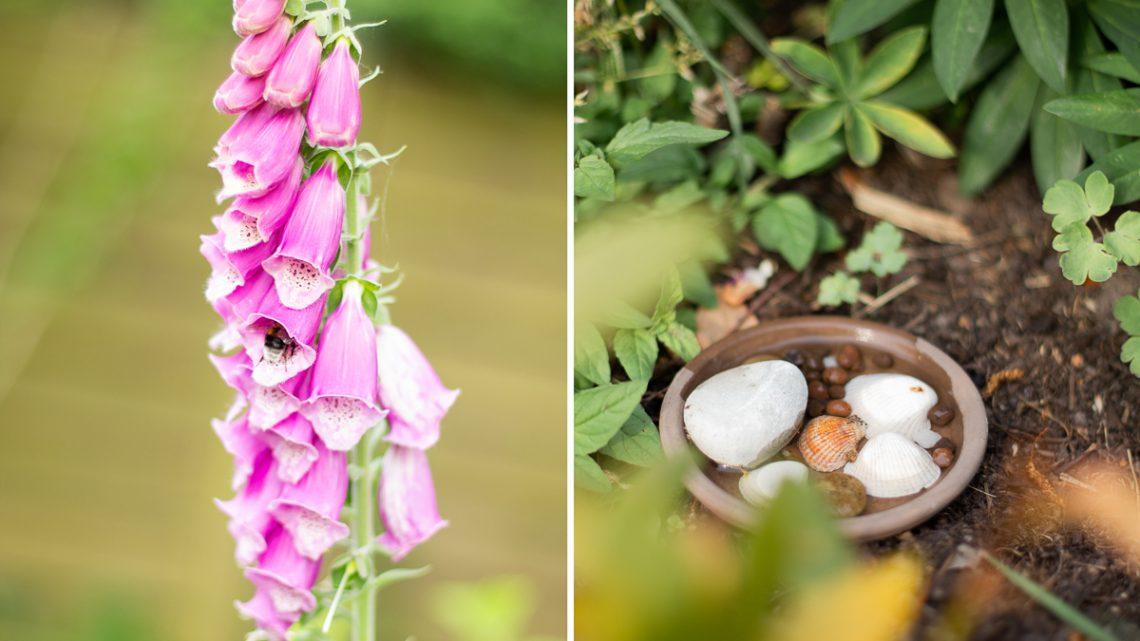 DIY Bienentränke – Mini Oase für Insekten selbermachen