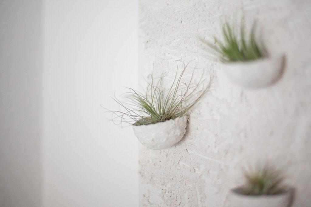 DIY Pflanzen Deko mit Tillandsien selber machen