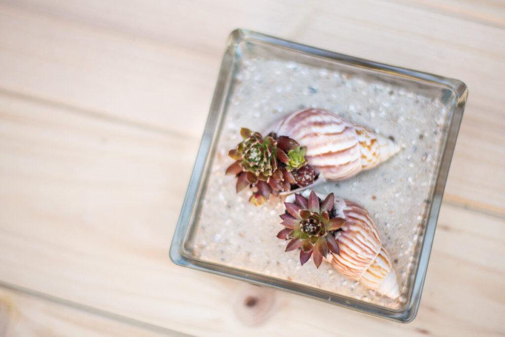 DIY Mini Garten in Muscheln - Maritime Sommerdeko
