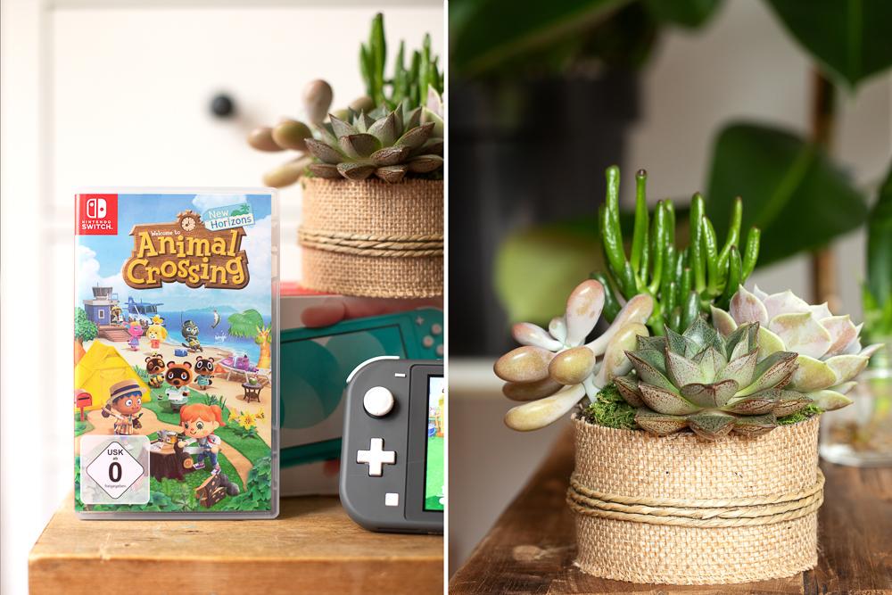 DIY: Mini Sukkulenten Garten gestalten [Werbung]
