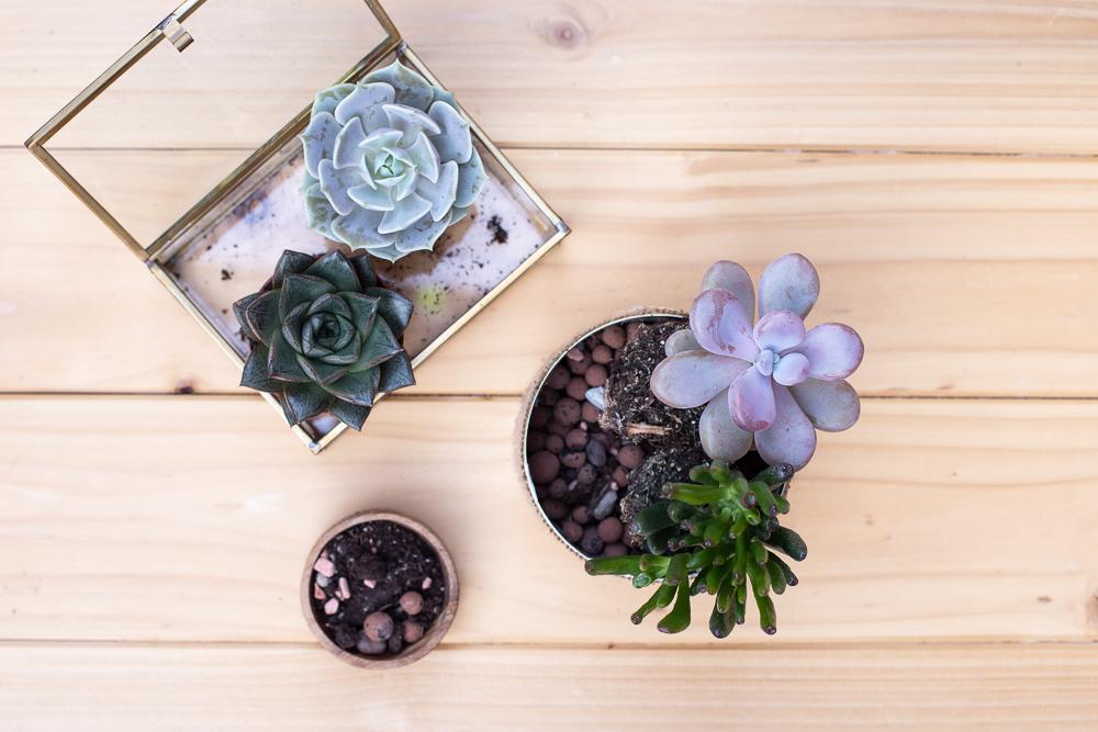 Mini Sukkulenten Garten gestalten - DIY Konservendosen Upcycling