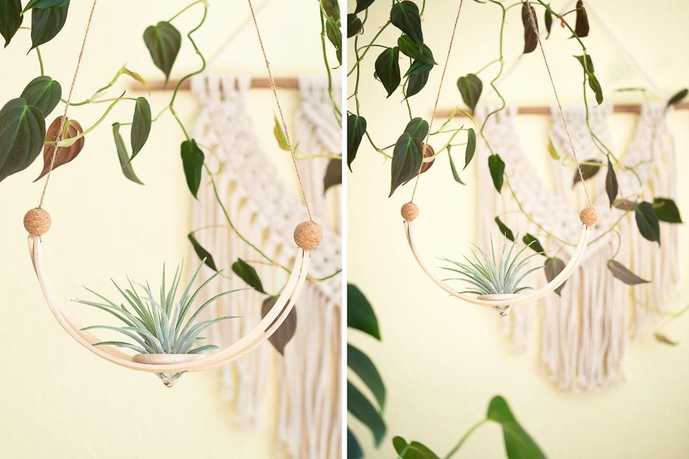 DIY Hängende Pflanzen Deko mit Tillandsien selber machen